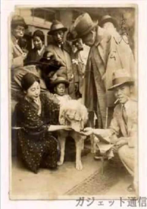 Hình ảnh chú chó Hachi trên bưu thiếp xưa