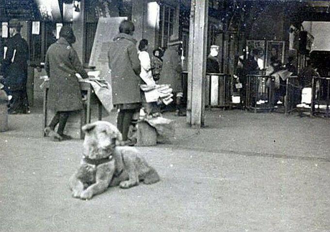 Hình ảnh buồn bã của chú chó Hachiko trong những ngày cuối cùng. Lúc này Hachi đáng thương cũng đã yếu lắm rồi...