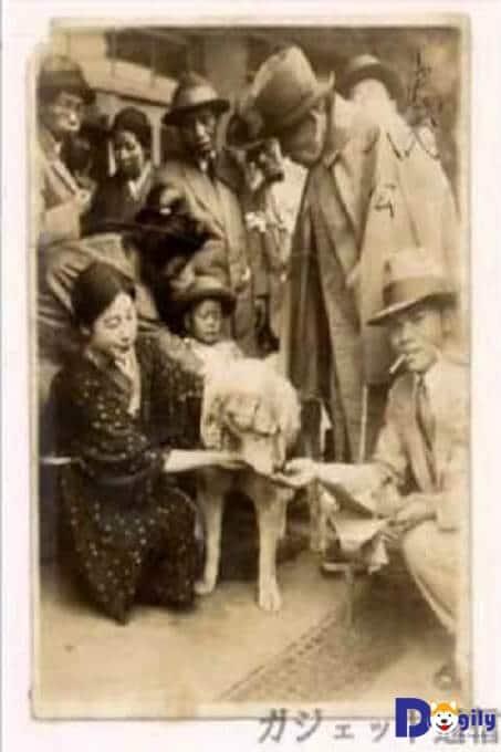 Hình ảnh chú chó Hachi trên bưu thiếp xưa.