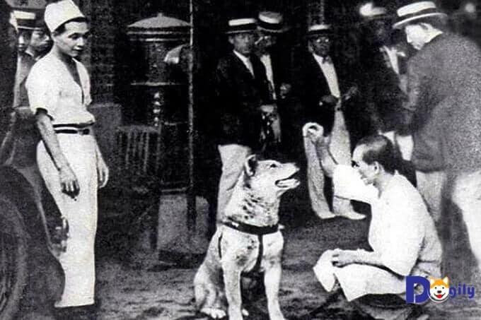 Người dân Odeta thay nhau chăm sóc chú chó Hachiko tội nghiệp...