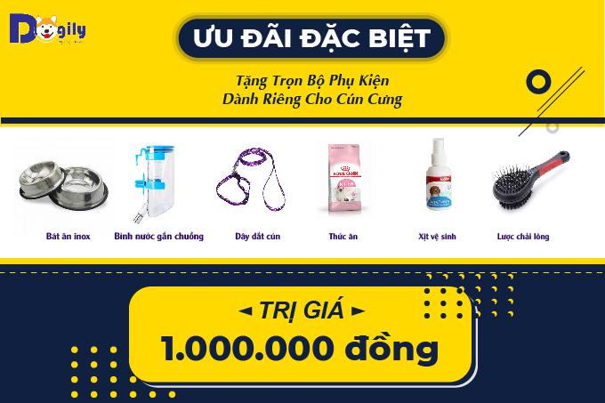 Khách hàng mua chó Bắc Hài tại hệ thống Dogily Petshop được tặng kèm bộ combo phụ kiện trị giá 1 triệu đồng.
