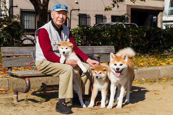 Đó là lý do mọi người không thể nuôi một con chó nào khác một khi đã có Akita inu