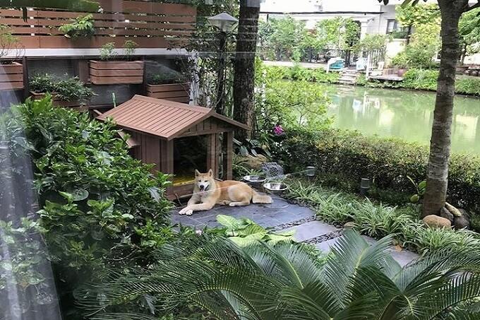 Chú chó akita Mochi được Dogily.vn nhập về tháng 03/2018. Hiện Mochi đang sống hạnh phúc cùng gia đình yêu thương tại Vinhomes Riverside Long Biên, Hà Nội.