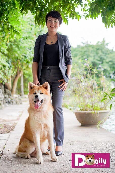Bạn cần thường xuyên chải lông cho chó Akita để giữ cho chúng luôn mềm mượt. Bạn có thể sử dụng sữa tắm chuyên dụng cho chó như SOS. Sau khi tắm, sấy khô bạn có thể dùng thêm dưỡng lông có mùi thơm thương hiệu Show Queen để thoa đều lên chú chó của mình