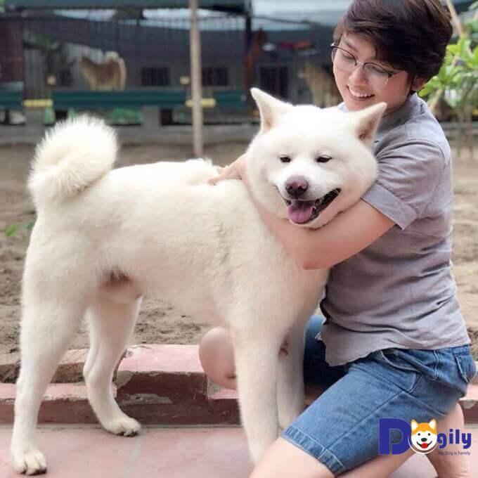 Chú chó Shinichi được Dogily.vn nhập về Việt Nam từ tháng 03/2018. Là dòng dõi của các nhà á quân thế giới, vô địch nhiều quốc gia.