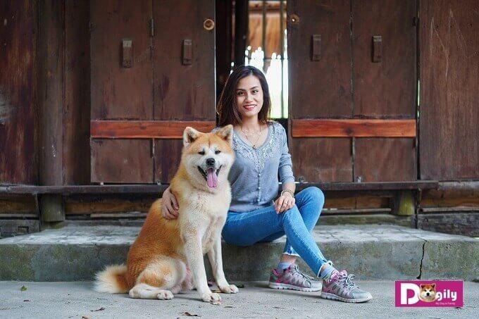 Chó Akita là giống chó có tính tình thân thiện và tuyệtđối trung thành. Trong hình là chú chó Gabi đang vui vẻ bên chị Hằng Nga - Phụ trách Dogily Petshop Tây Hồ.