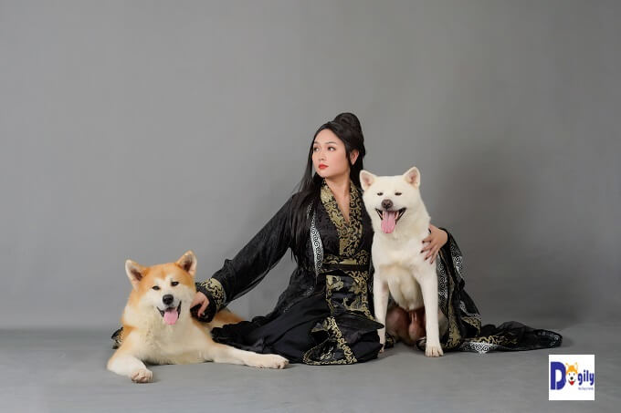Là giống chó quý hiếm và là Quốc khuyển của Nhật Bản. Vì vậy, mức giá chó Akita tại Việt Nam là tương đối cao so với mặt bằng các giống chó khác