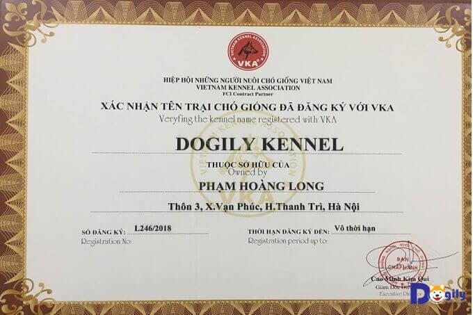Giấy chứng nhận thành viên chính thức Hiệp hội những người nuôi chó giống tại Việt Nam của Dogily Petshop.