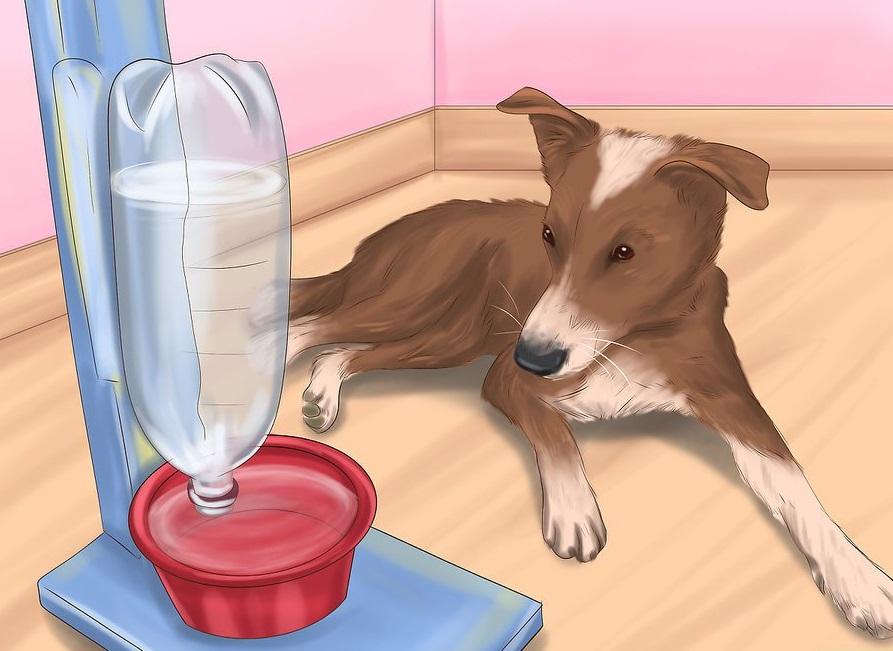 Phòng ngừa chó bị sốc nhiệt. Bạn cần cung cấp đầy đủ nước, thường xuyên và liên tục trong ngày cho chú cún của mình