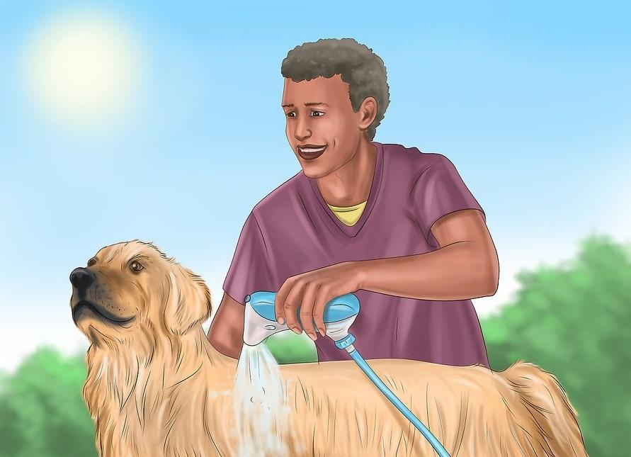 Hạ nhiệt từ từ cho chó có biểu hiện say nóng bằng nước mát