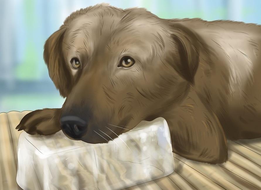 Khi chó có dấu hiệu bị sốc nhiệt. Bạn có thể cho chó ăn đá lạnh để giảm nhiệt hiệu quả