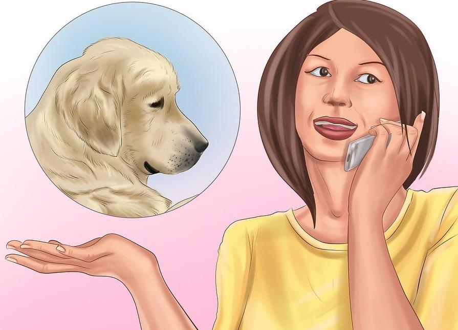 Goi ngay bác sỹ nếu sau khi sơ cứu chó vẫn không thuyên giảm.