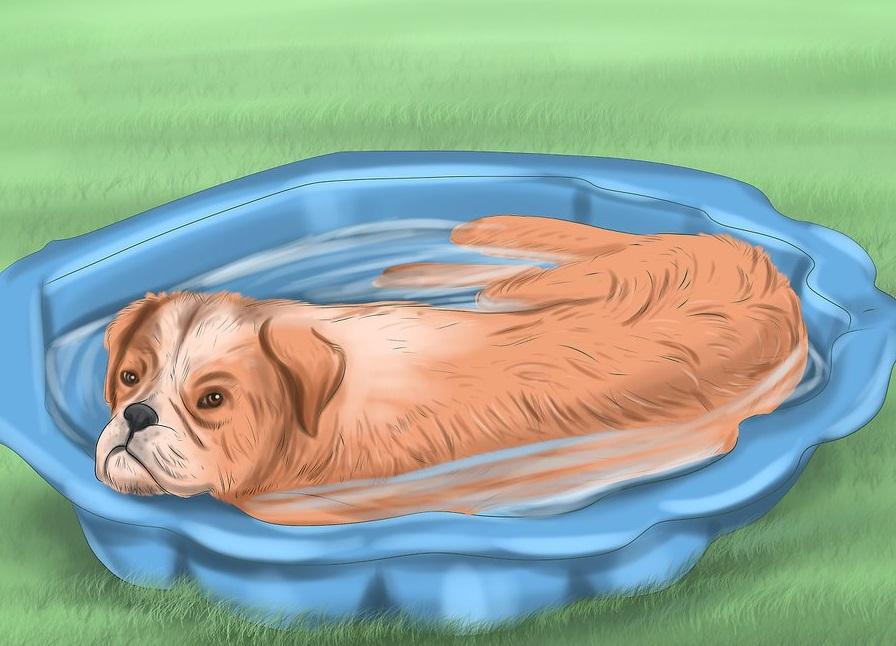 Phòng ngừa chó bị sốc nhiệt: Nếu nhà có sân vườn. Bạn nên chuẩn bị bể hay bồn nước để cún cưng của mình giải nhiệt