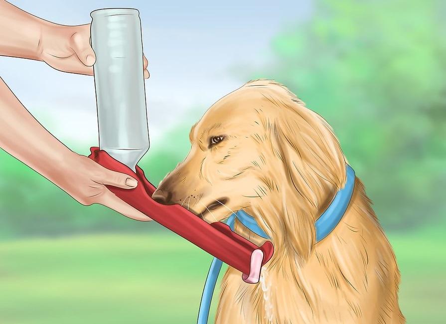 Phòng ngừa chó bị sốc nhiệt 3