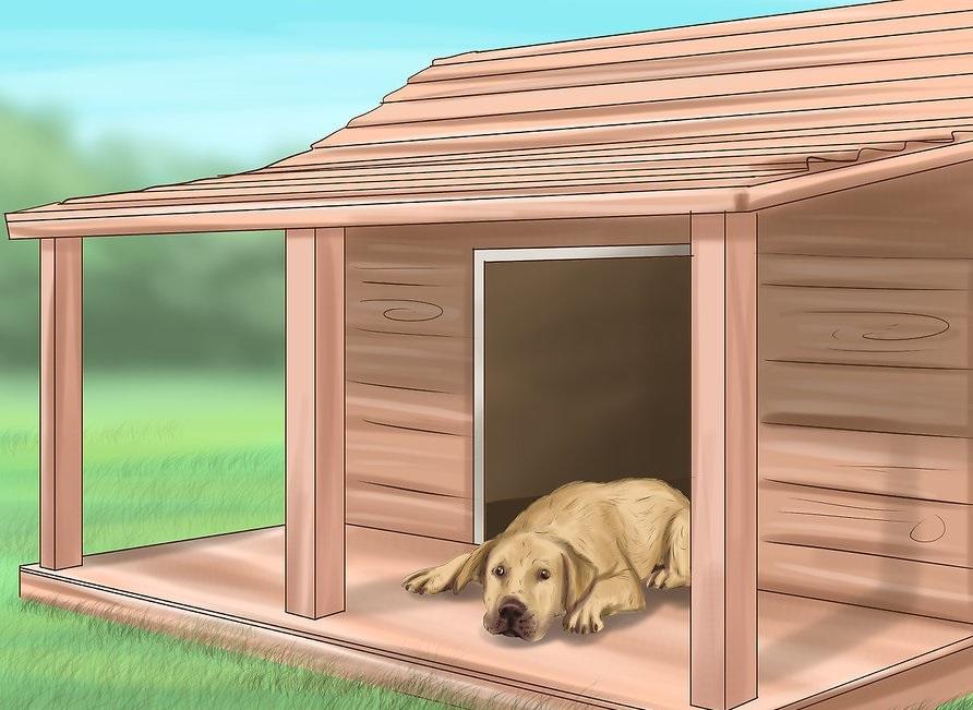 Phòng ngừa chó bị sốc nhiệt 5