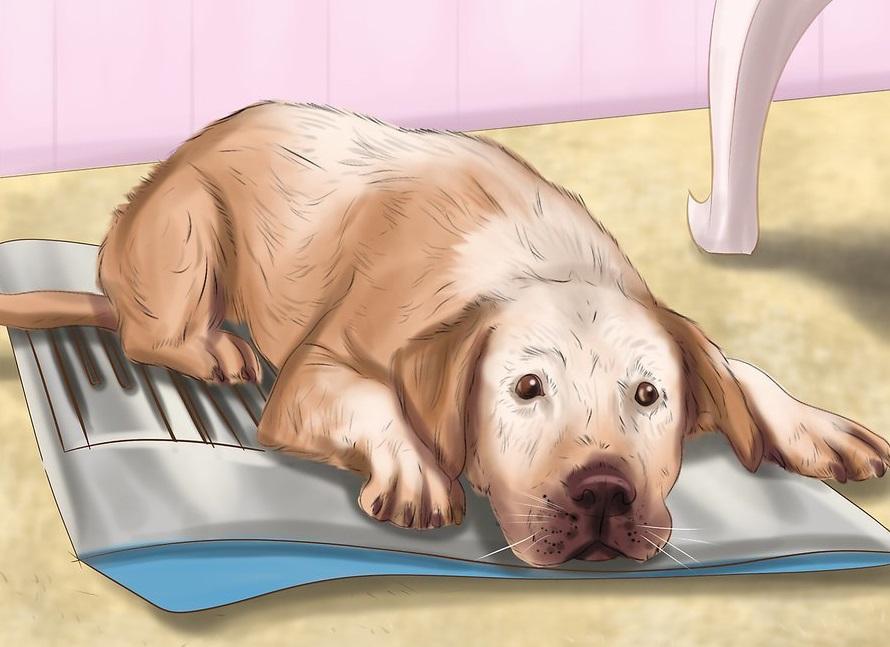 Phòng ngừa chó bị sốc nhiệt 6