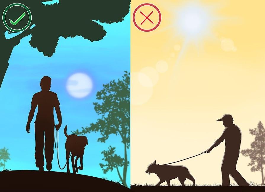 Tuyệt đối không dắt cho đi dạo vào lúc trưa nắng hoặc khi trời nắng gắt. Nên cho chó ra ngoài vào buổi sáng sớm hoặc chiều mát