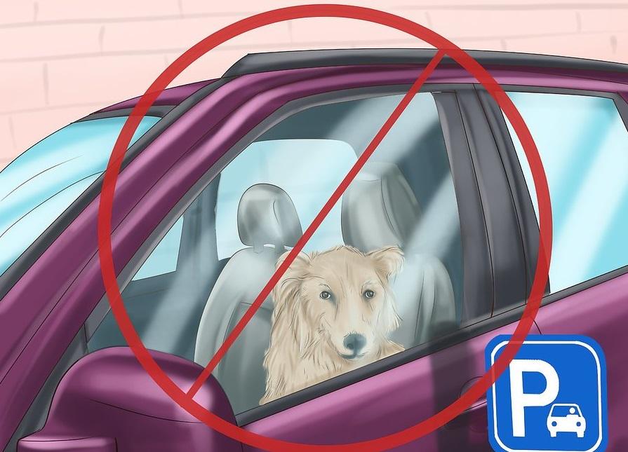 Không để chó trong xe khi trời nắng nóng