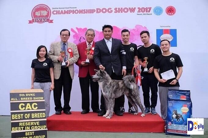 Izumi Gai Kaito. Vietnam Junior Champion. Bố là nhà vô địch châu Âu và vô địch Nga Suzuki cực nổi tiếng tại châu Âu