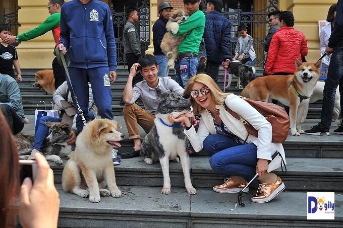 Offline Hội những người yêu giống chó Akita Inu Việt Nam tại Hà Nội tháng 03/2018 nhân ngày Hachiko's Day