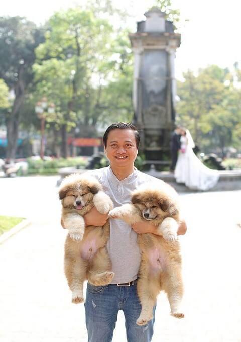 Hai em Akita lông xù 3 tháng tuối được Dogily.vn nhập về Việt Nam trong tháng 3/2018. Các bé luôn được chăm sóc trong điều kiện tốt nhất để phát triển.
