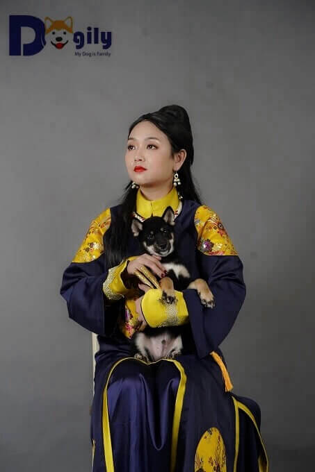 Trong lịch sử, chó Shiba thường được các gia đình quyền quý nuôi làm thú cưng. Hình ảnh trên mang tính chất minh họa của Dogily Petshop