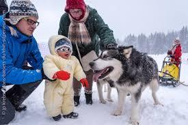 Chó alaska cực kỳ thân thiện và gần gũi với trẻ em