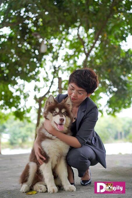 """Chó alaska rất thích được ở gần chủ nhân. Nếu bị bỏ lại một mình chúng có thể hú hét do hội chứng """"sợ xa cách"""""""