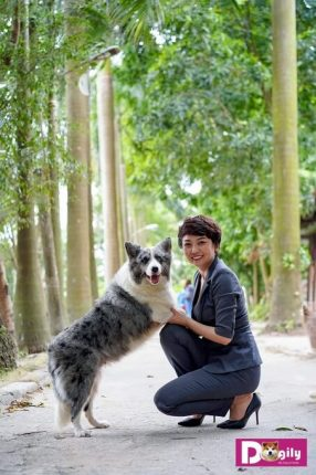 Tiêu chuẩn, giá mua bán chó border collie tại Hà nội tphcm