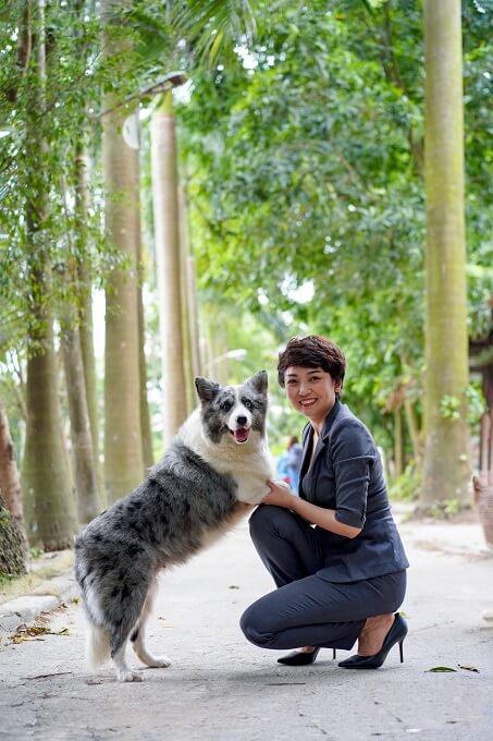 Hình ảnh một chú chó Collie biên giới cái trưởng thành tại trang trại Dogily Kennel.