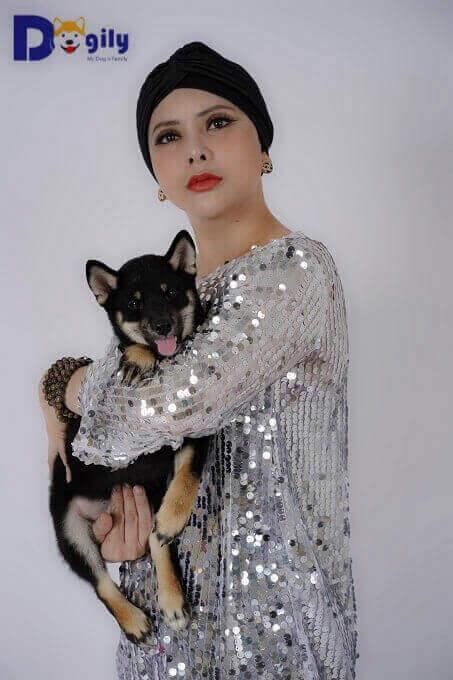 Chó Shiba Inu là thú cưng rất được giới doanh nhân, nghệ sỹ Việt Nam ưa chuộng.