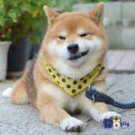 Khen mà chi! Ryuji đẹp chuẩn soái ca mà. Nụ cười đểu mà so cute của thánh biểu cảm.