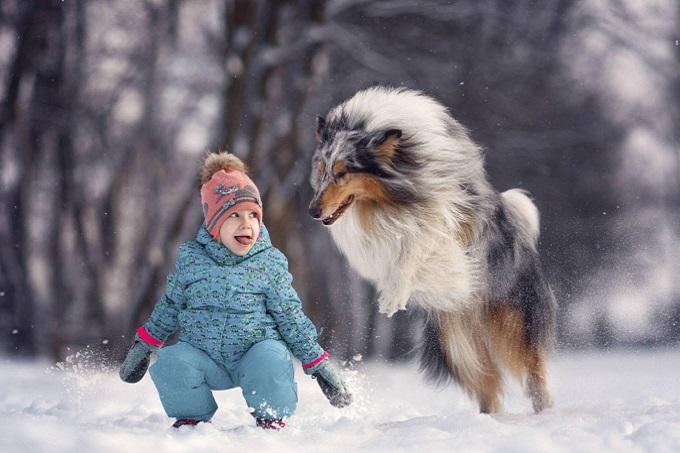 Hình ảnh tuyệt đẹp chú chó Rough Collie lông dài vui đùa với trẻ em trên tuyết trắng nước Anh.