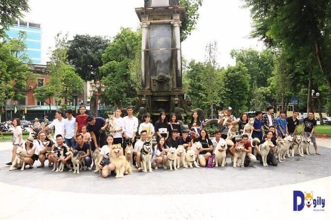 Hình ảnh buổi offline Hội yêu chó kéo xe Miền Bắc (gồm: chó Alaska, chó Samoyed và husky) tại vườn hoa Con Cóc - Hà Nội.