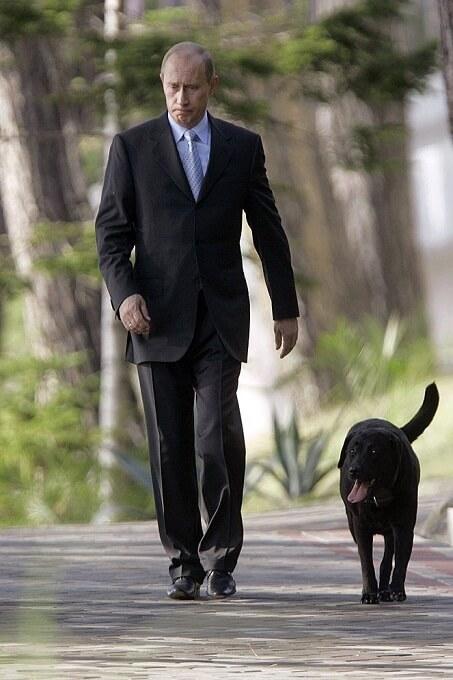 Giống chó ưa thích của các nguyên thủ quốc gia như Putin, Bill Clinton là labrador