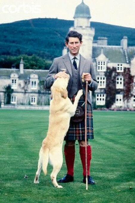 Chó labrador retriever cũng là cún cưng của Thái tử nước Anh Chales