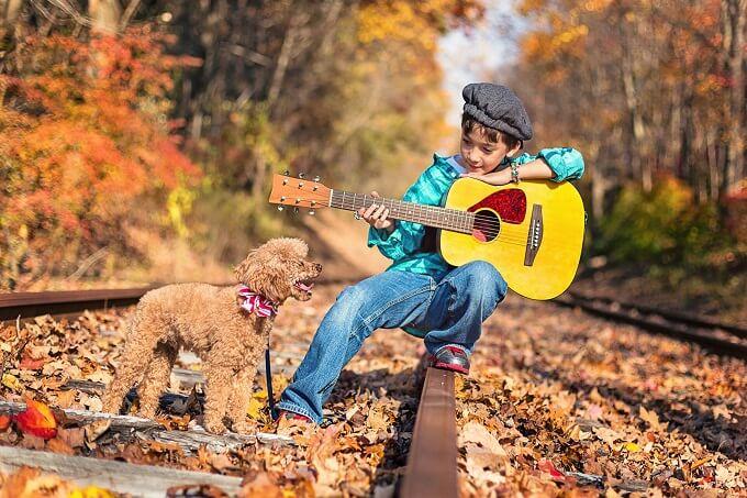 Chó poodle người bạn đồng hành thân thiết của gia đình