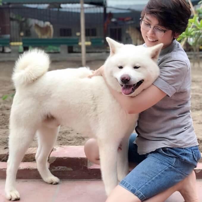 Chú chó akita trắng tuyết nhập Nga của trang trại Dogily Kennels