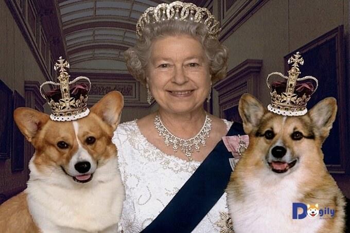 Nữ hoàng Anh Elizabeth II bên những chú chó Corgi yêu quý của bà.