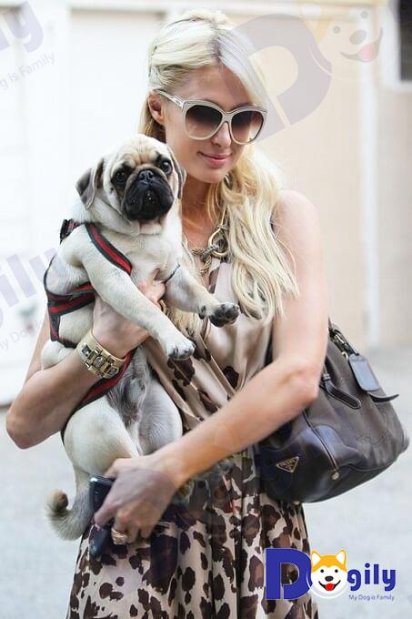 Hình ảnh tiểu thư Paris Hilton bên cún cưng của mình tại nước Pháp.