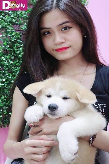 Dogily Petshop - Mua bán chó Akita Inu bảo hành, tư vấn trọn đời