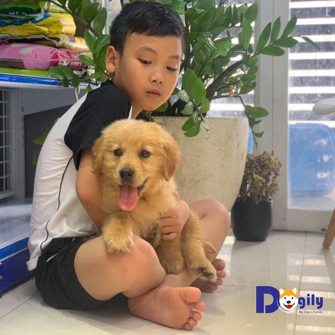 Mua chó Golden tại Dogily Petshop có hợp đồng rõ ràng. Bảo hành dài hạn. Được bác sỹ thú y của phòng khám Dogily Vet tham khám tận nhà.