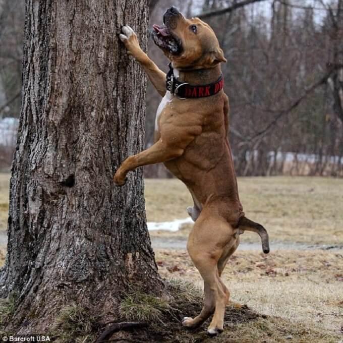 Bạn nên thường xuyên cho chú chó của mình tập luyện về hình thể và tuân thủ mệnh lệnh ngay khi còn nhỏ