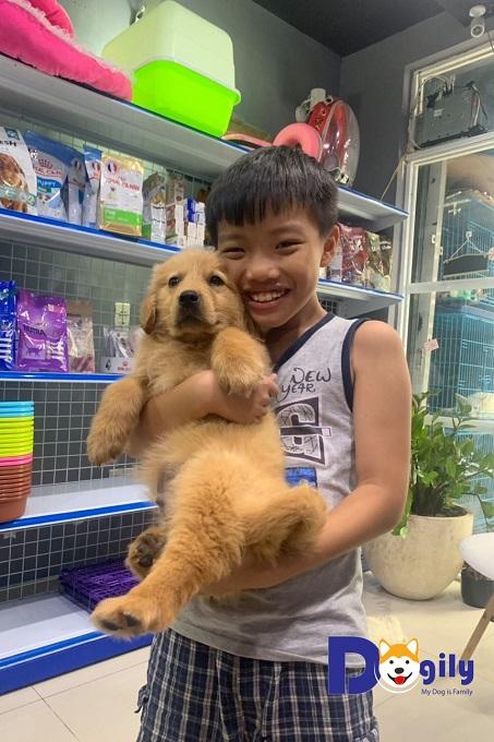 Chó Golden người bạn thân thiết của trẻ em.