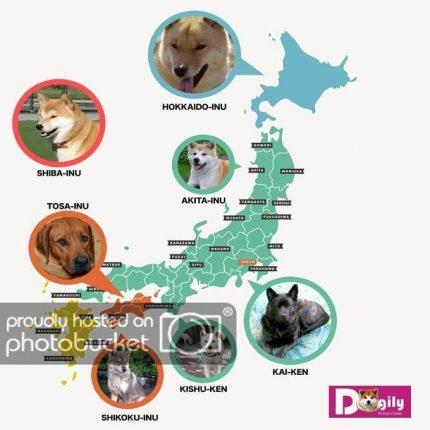 Bản đồ nguồn gốc các giống chó Nhật Bản - Dogily Petshop