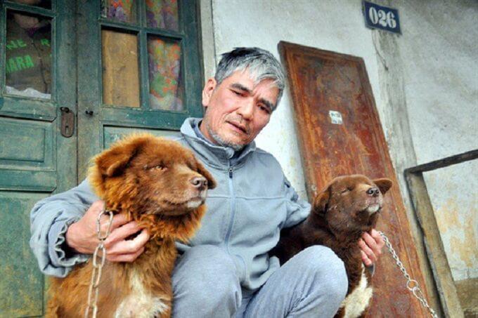 Chó Bắc Hà rất thân thiện và trung thành với chủ nhân. Nhưng cũng rất cảnh giác trước người lạ