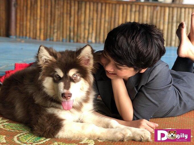 Tại Dogily Kennel. Những chú chó Alaska được chăm sóc, yêu thương với chế độ tốt nhất theo chuẩn các trại Châu Âu. Đảm bảo mang đến cho cộng đồng yêu cún cưng những chú chó hoàn hảo
