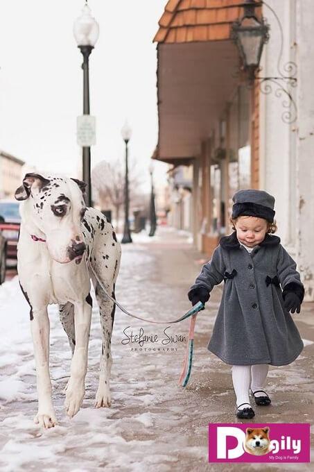 Nếu bạn cần tim một em Great Dane đồng hành trong gia đình. Bạn có thể đặt mua online hoặc trực tiếp tại hệ thống Dogily Petshop trên toàn quốc