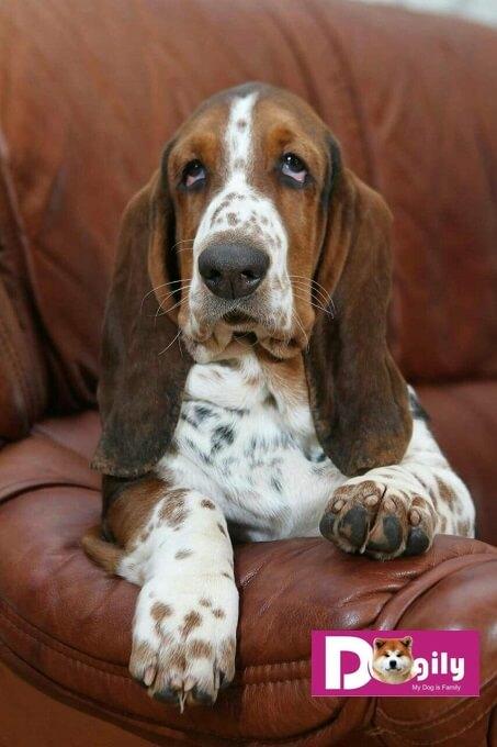 Hợp đồng mua bán, giấy bảo hành, hướng dẫn chăm sóc chó con