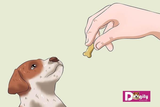 Bạn nên khen thưởng khi cún cưng đã đi vệ sinh đúng chỗ.